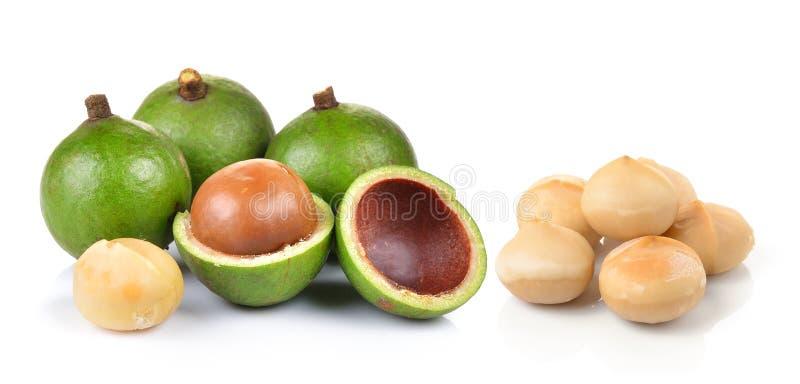 Verse macadamia noot royalty-vrije stock foto's