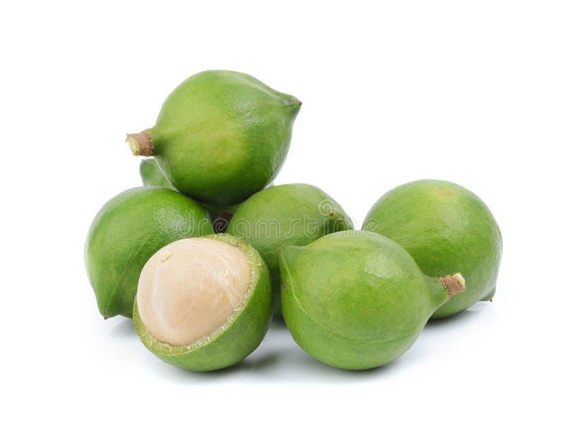 Verse macadamia noot op witte achtergrond stock fotografie