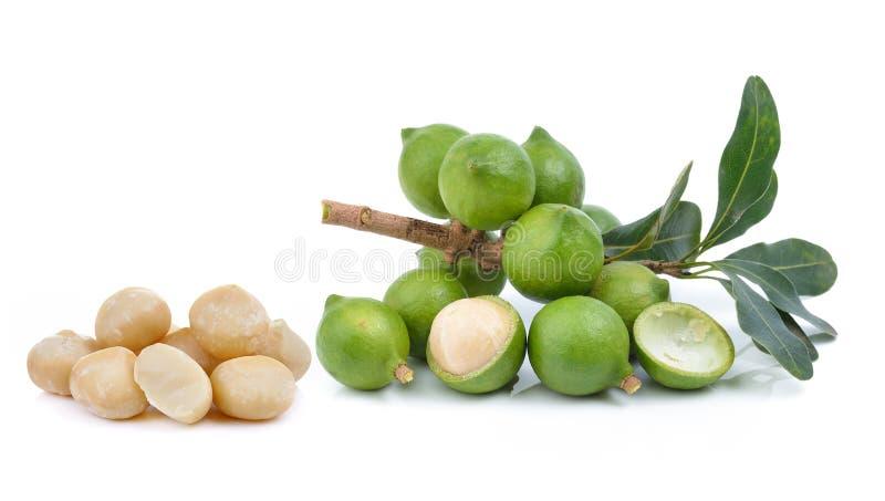 Verse macadamia noot op witte achtergrond stock foto