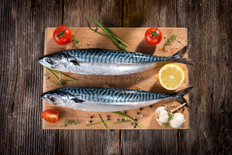 Verse Makreel stock foto