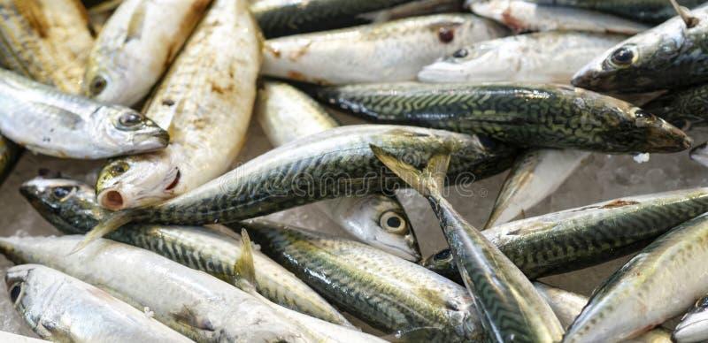 Verse Makreel stock fotografie