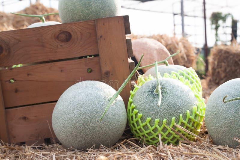 Verse meloenen in houten doos en op stro in organisch landbouwbedrijf stock foto's