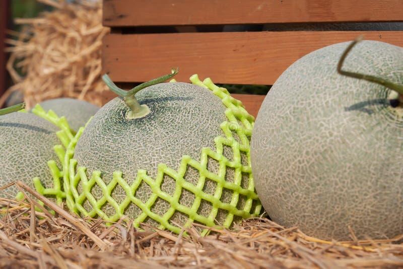 Verse meloenen op stro Sluit omhoog Organisch fruit royalty-vrije stock fotografie
