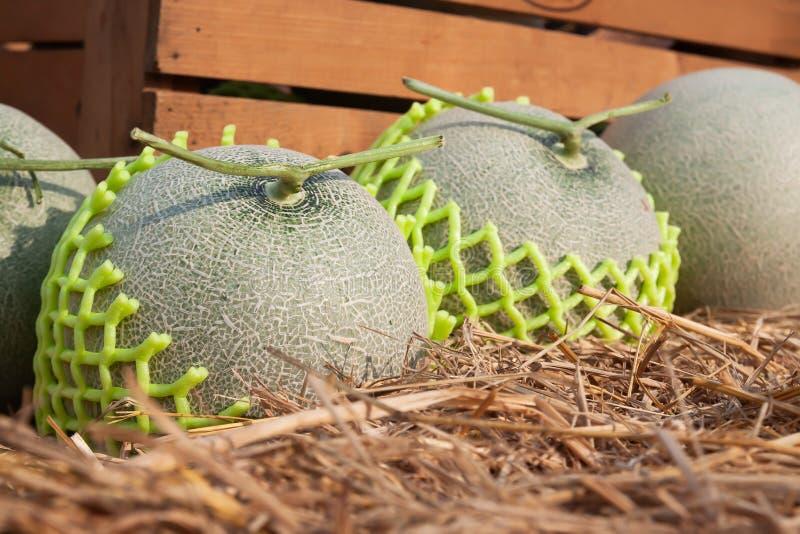 Verse meloenen op stro Sluit omhoog Organisch fruit stock afbeelding