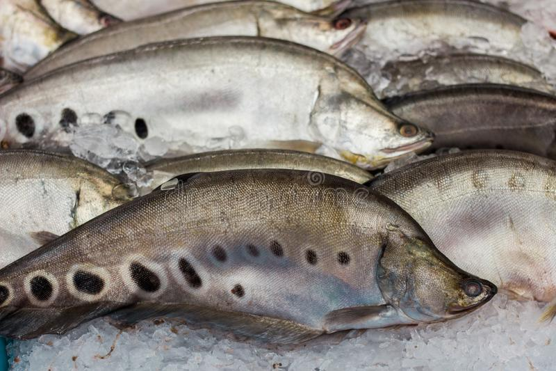Verse messenvissen op het ijs in supermarkt stock fotografie