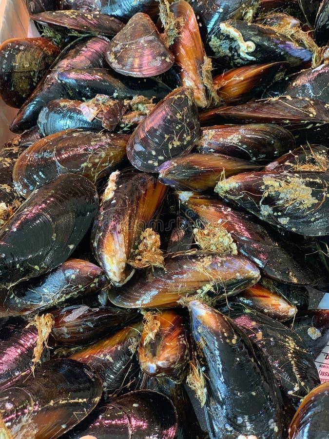 Verse mosselen op de vissenmarkt royalty-vrije stock afbeelding
