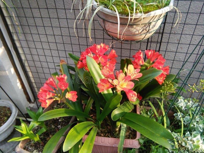 Verse natuurlijke bloemen op de pot royalty-vrije stock foto