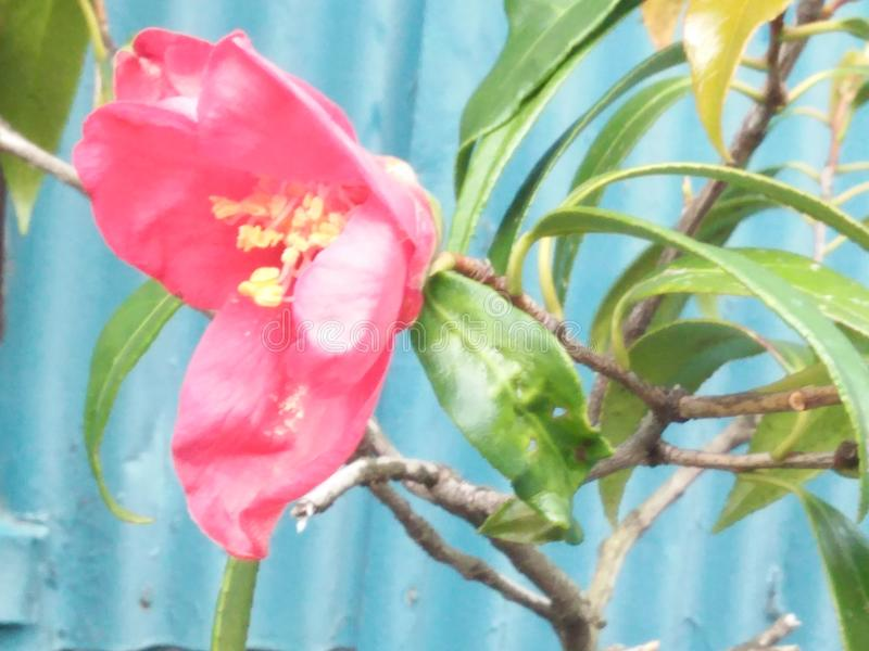 Verse natuurlijke bloemen op de pot royalty-vrije stock afbeelding