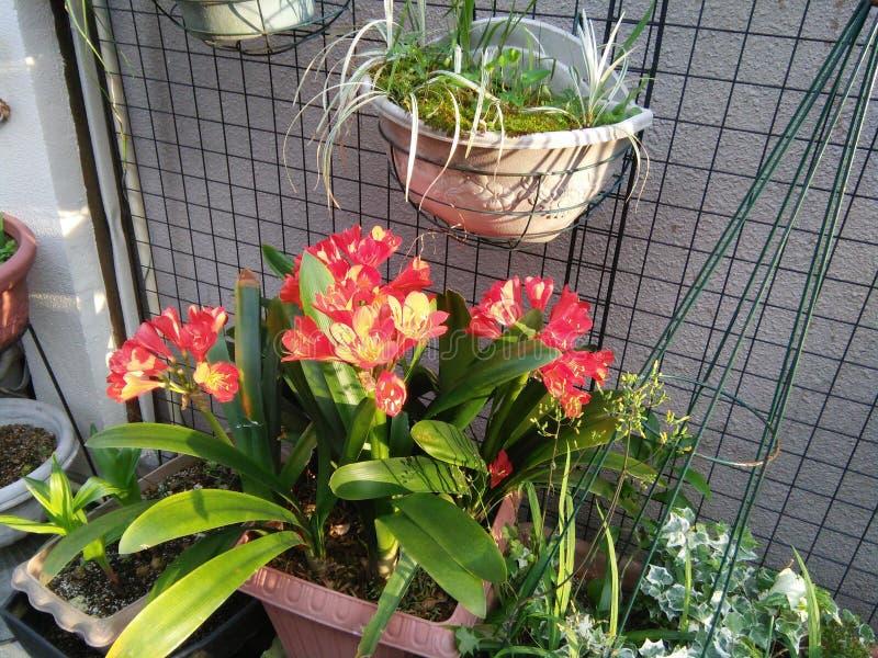 Verse natuurlijke bloemen op de pot stock foto