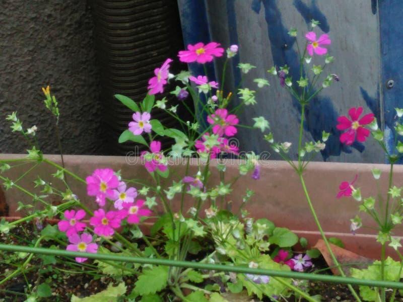 Verse natuurlijke bloemen op de pot stock fotografie