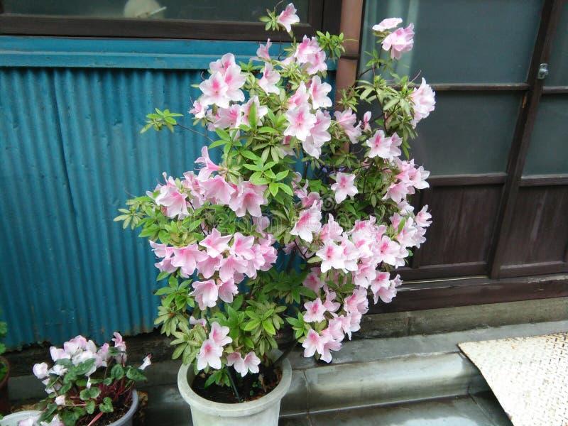 Verse natuurlijke bloemen op de pot royalty-vrije stock afbeeldingen