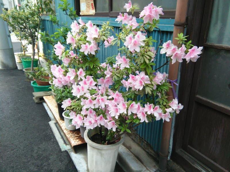 Verse natuurlijke bloemen op de pot stock foto's