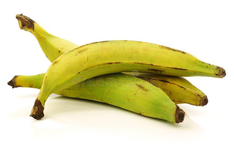 Verse nog onrijpe weegbree (baksel) bananen royalty-vrije stock foto's