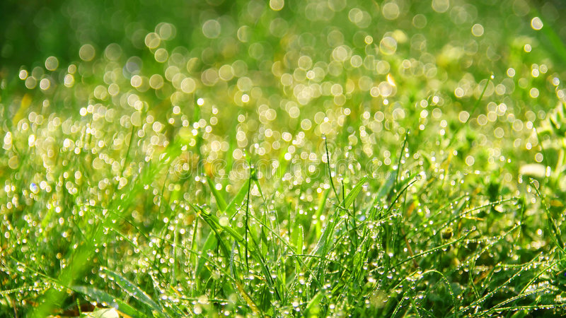 Verse ochtenddauw in gras stock afbeelding