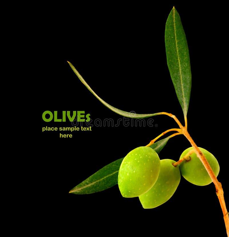 Verse olijven royalty-vrije stock afbeelding