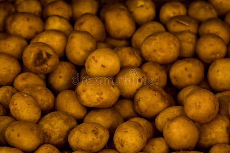 Verse organische aardappeltribune uit onder vele grote aardappels als achtergrond in de markt Hoop van aardappelwortel royalty-vrije stock fotografie