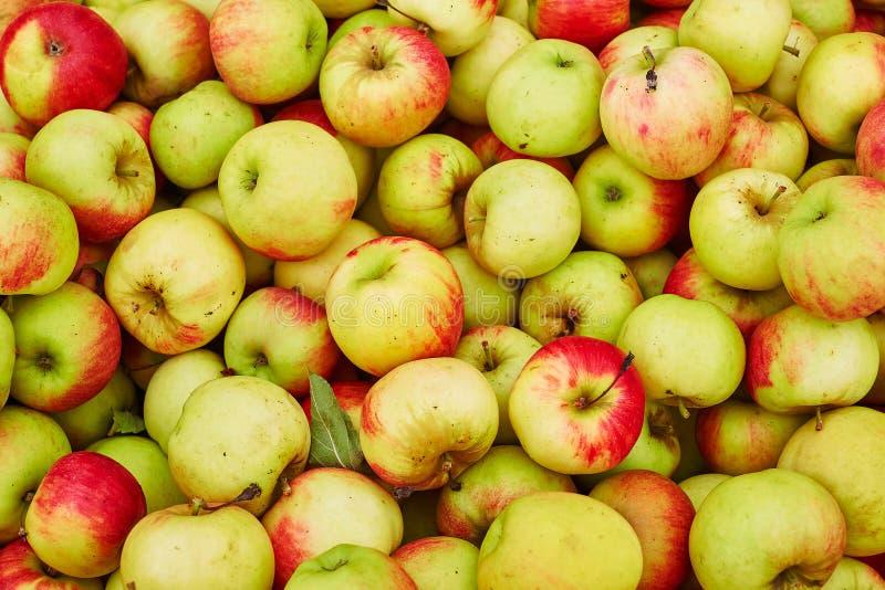 Verse organische appelen royalty-vrije stock afbeeldingen