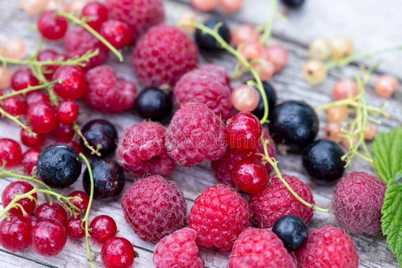 Verse organische bessen frambozen, bosbessen, rode aalbessen stock afbeelding