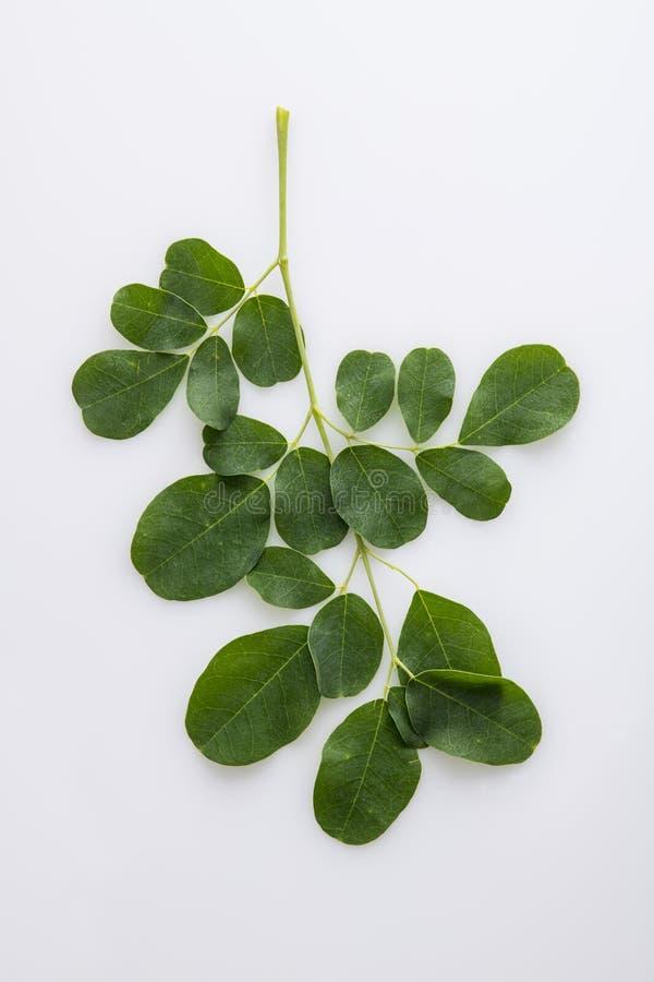 Verse Organische die Moringa Bladeren op Witte Achtergrond worden geïsoleerd stock fotografie