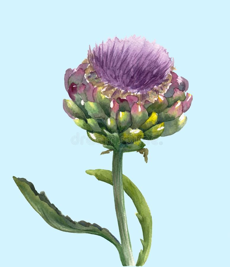 Verse organische die scolymus van Cynara van de artisjokbloem op blauwe achtergrond wordt geïsoleerd Waterverf botanische illustr royalty-vrije illustratie