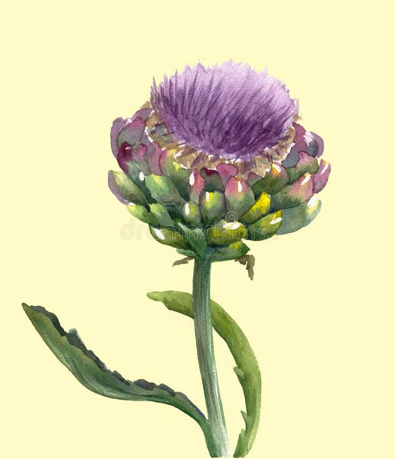 Verse organische die scolymus van Cynara van de artisjokbloem op lichtgele achtergrond wordt geïsoleerd Waterverf botanische illu stock illustratie
