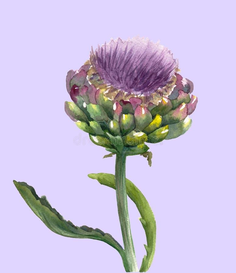 Verse organische die scolymus van Cynara van de artisjokbloem op purpere achtergrond wordt geïsoleerd Waterverf botanische illust stock illustratie