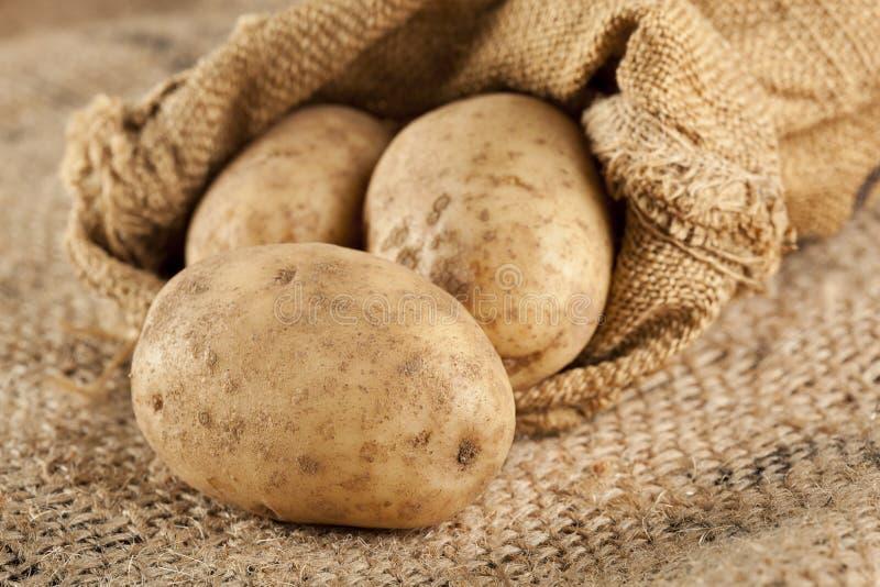 Verse Organische Gehele Aardappel royalty-vrije stock afbeelding