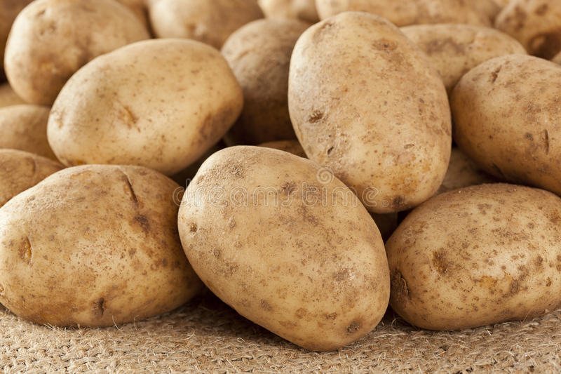 Verse Organische Gehele Aardappel stock foto's