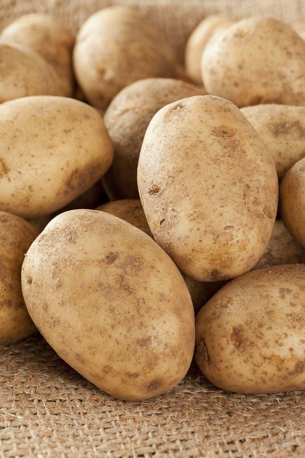 Verse Organische Gehele Aardappel stock foto