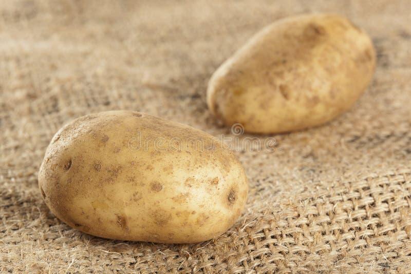 Verse Organische Gehele Aardappel royalty-vrije stock afbeeldingen