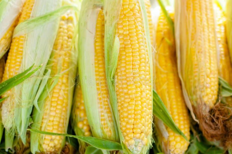 Verse, organische, naar huis gecultiveerde gele suikermaïs royalty-vrije stock foto's