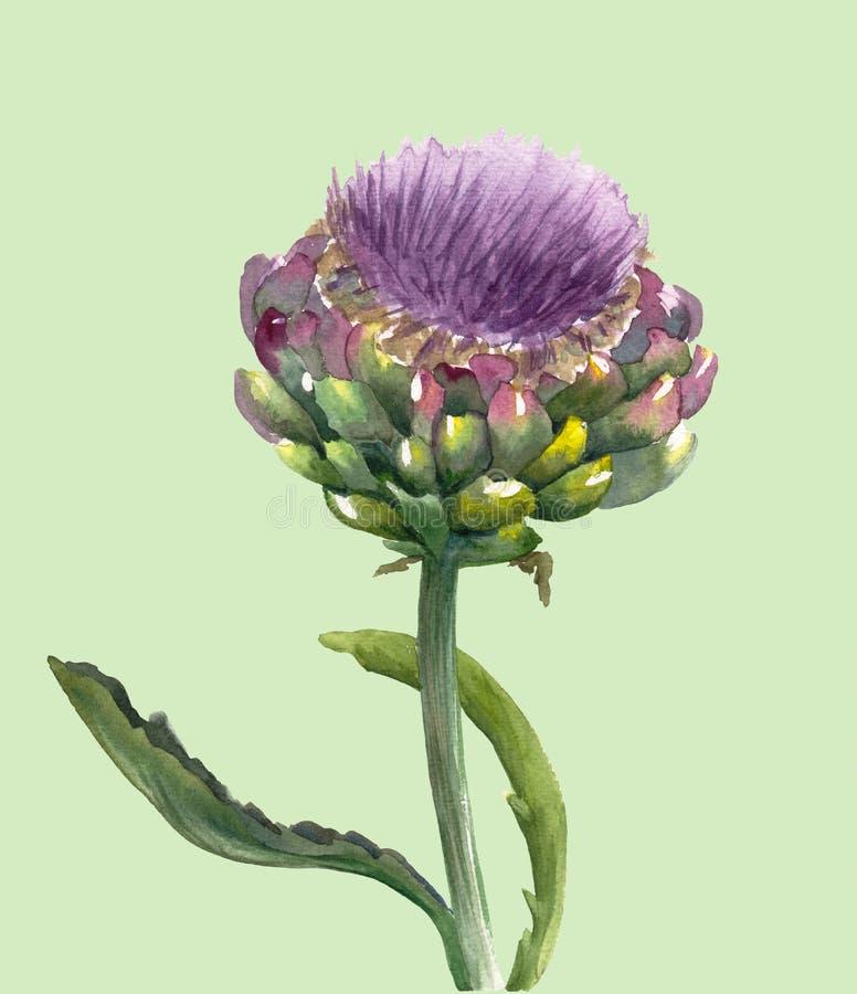 Verse organische scolymus van Cynara van de artisjokbloem die op lichte achtergrond wordt geïsoleerd Waterverf botanische illustr royalty-vrije illustratie