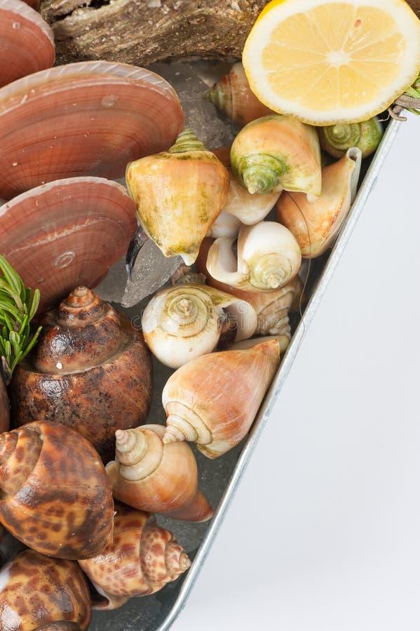 Verse overzees voedselreeks royalty-vrije stock foto