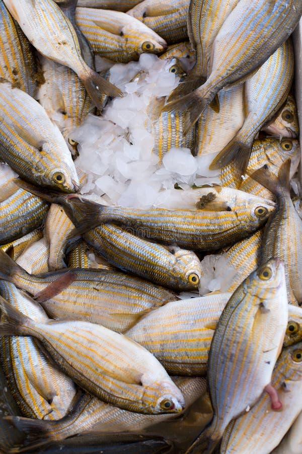 Verse overzeese vastgehaakte vissen, verticale raamstijl stock afbeeldingen