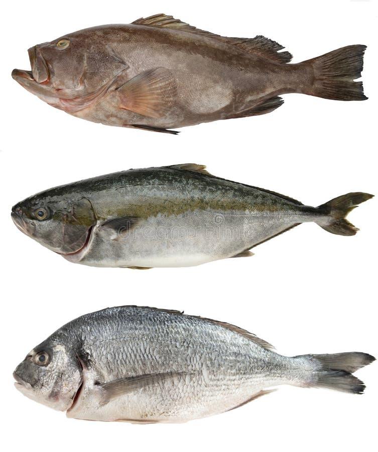 Verse overzeese vissenreeks Tandbaars, Tonijn, Dorado op wit wordt geïsoleerd dat stock afbeelding