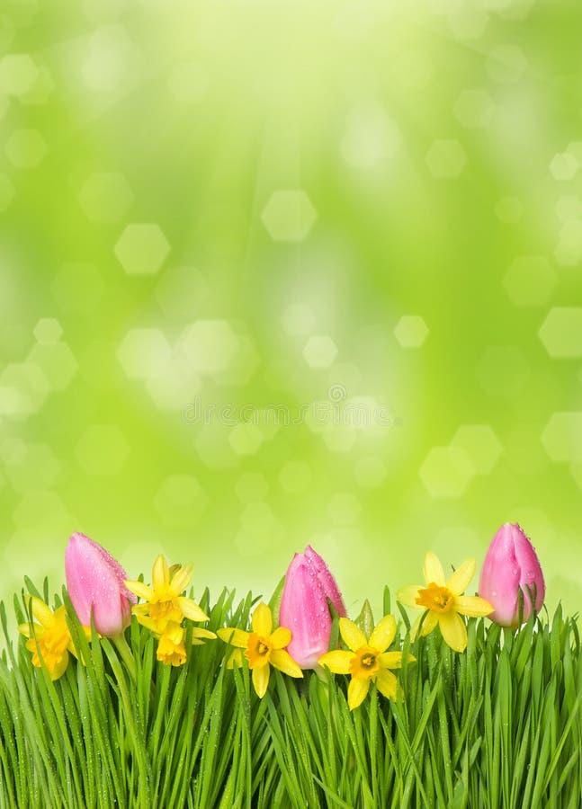 Verse Pasen-bloemen. narcissen, tulpen in gras royalty-vrije stock fotografie