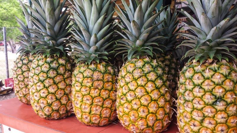 Verse pineaples stock foto