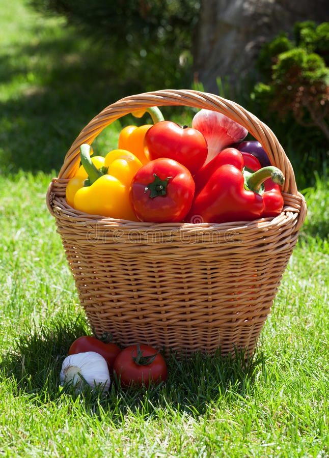 Verse rijpe groenten in de mand stock afbeeldingen