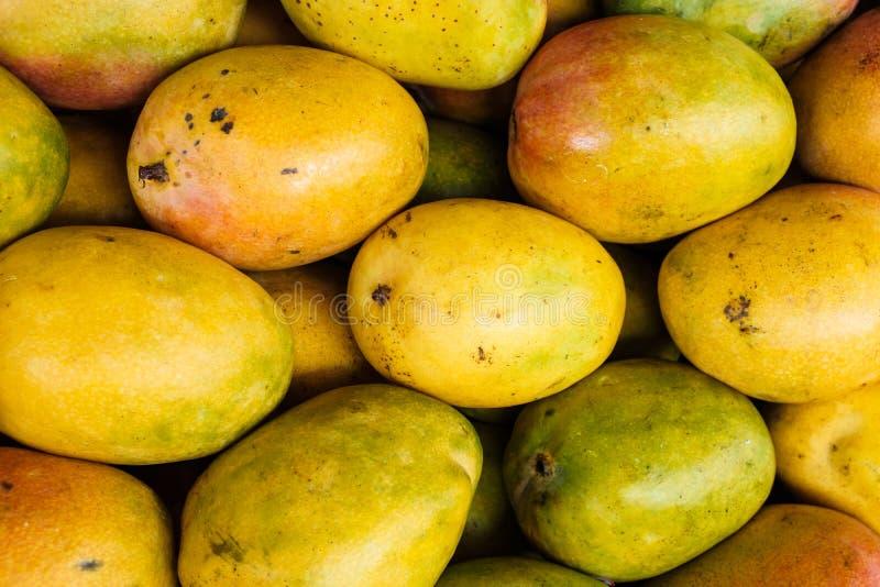 Verse rijpe mango's stock afbeelding