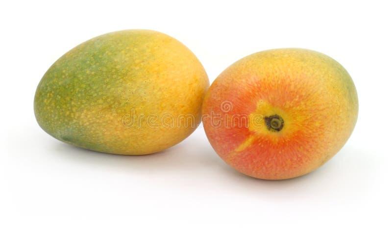 Verse rijpe mango's stock fotografie