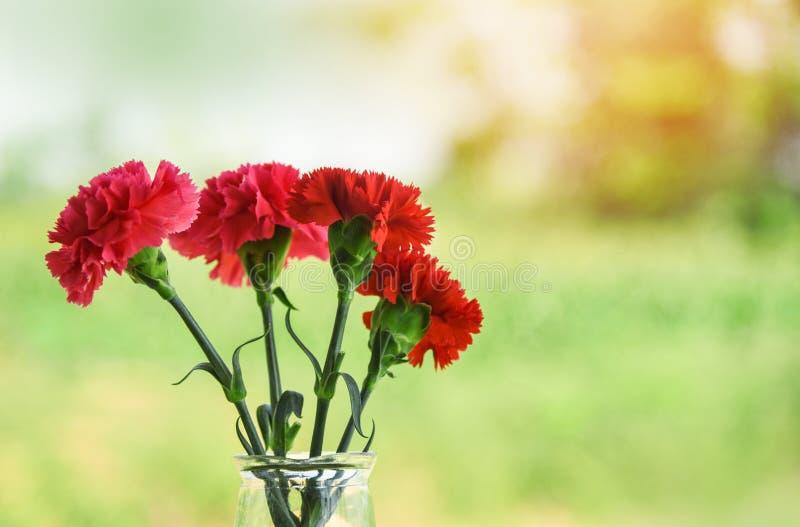 Verse rode en roze bloeiende het glaskruik van de anjerbloem en aard groene achtergrond stock foto