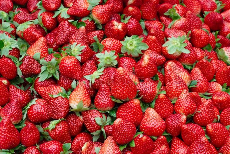 Verse Rode Rijpe Aardbeien royalty-vrije stock afbeelding