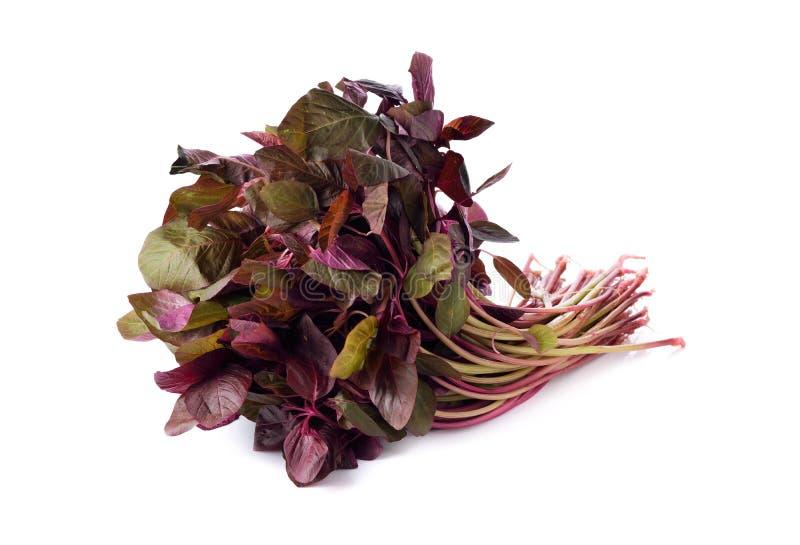 Verse Rode spinazie of rode amarant op wit royalty-vrije stock afbeeldingen