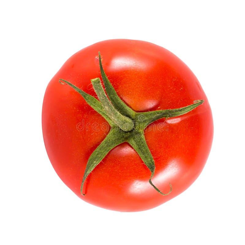 Verse rode tomaat royalty-vrije stock afbeeldingen