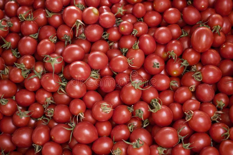 Verse rode tomaten op het gebied of bij een landbouwersmarkt stock fotografie