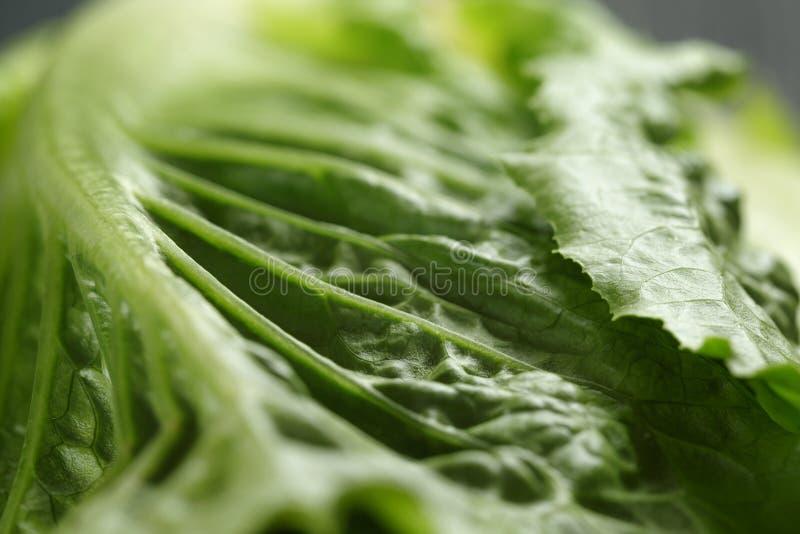 Verse romain groene salade dichte omhooggaand royalty-vrije stock foto