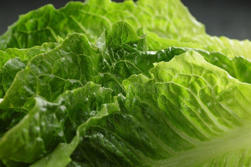 Verse romain groene salade dichte omhooggaand stock afbeeldingen