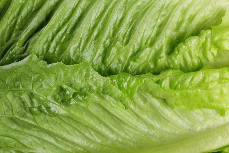 Verse romain groene salade dichte omhooggaand royalty-vrije stock fotografie
