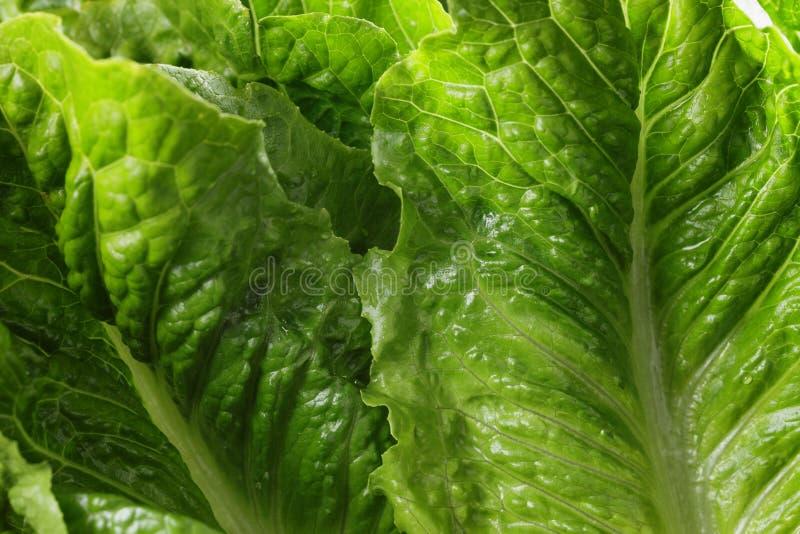 Verse romain groene salade op houten lijst royalty-vrije stock fotografie