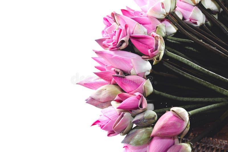 Verse roze die lotusbloemknoppen aan worshipers worden aangeboden royalty-vrije stock foto's